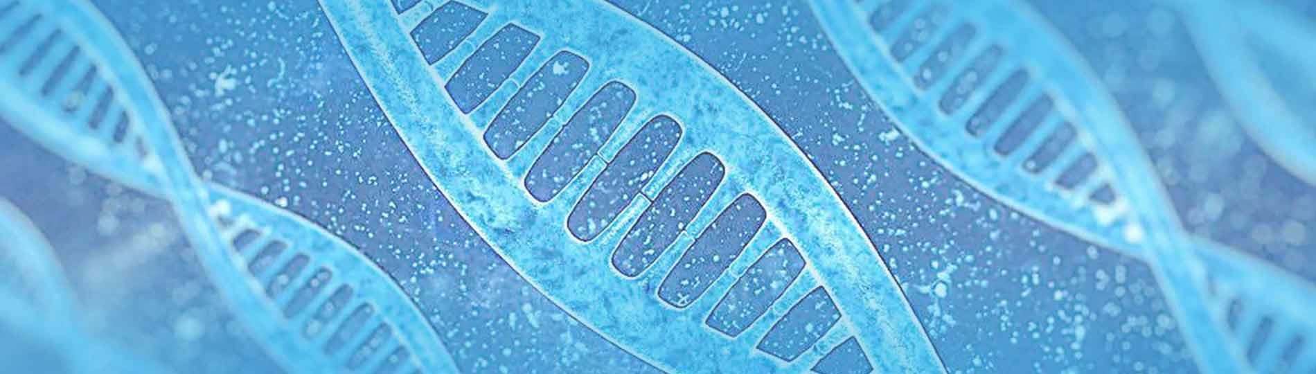 最新结核分枝杆菌基因敲除菌株现货