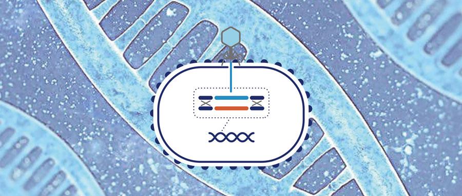 2019年最新结核分枝杆菌基因敲除菌株
